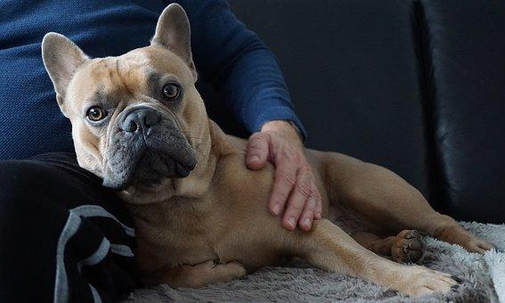 ubezpieczenia dla psów